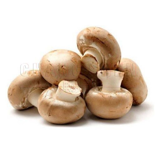 Golden Chef Button Mushroom | 425 gm/can