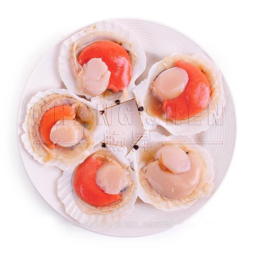Half Shell Scallop With Roe 半壳带子和蛋  from 9pcs/pkt~±1 kg