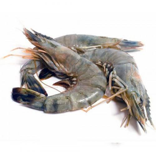 Tiger Prawn 老虎虾 from 20pcs/pkt | ±1 kg